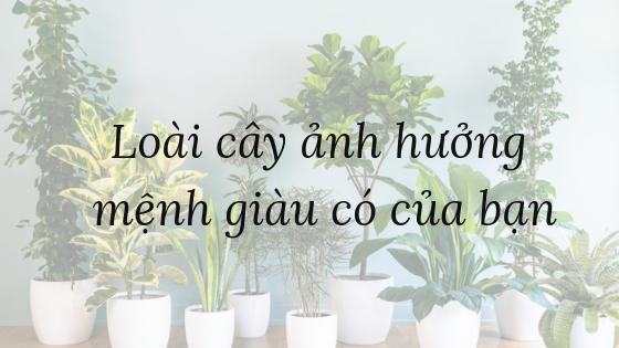 loai-cay-anh-huong-menh-giau-co-cua-ban